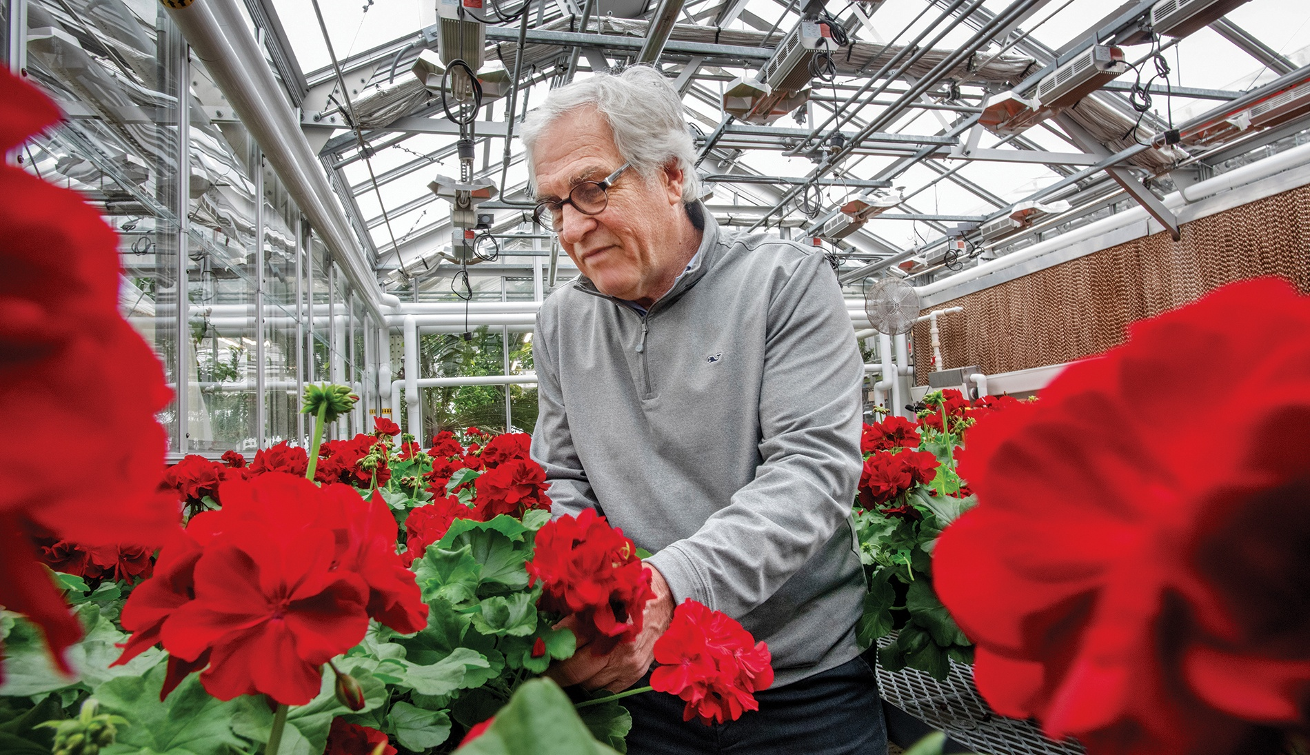 Jackson, director of Brown's Plant Environmental Center, with his hand-tended Commencement geraniums