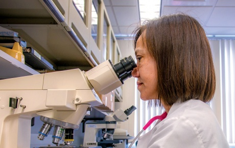 Susan Cu-Uvin MD looking into a microscope in a lab.